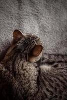 einschlafen foto