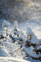 russischer Winter foto