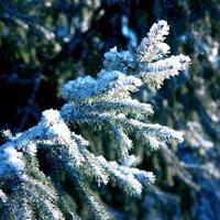 Winterhintergrund, Landschaft. Winterbäume im Wunderland. Winter