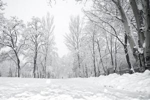 Winterpark foto