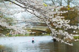Frühlingsrudern foto