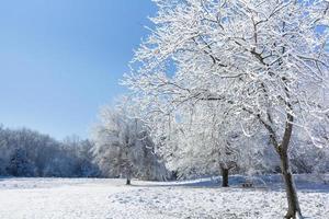 schneebedeckte Winterbäume foto