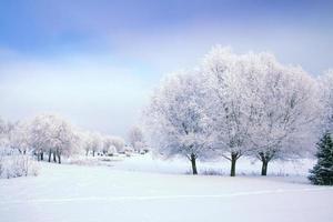 Wintergeschichte foto