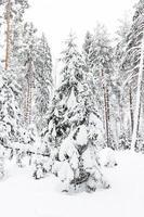 russischer Winterwald im Schnee
