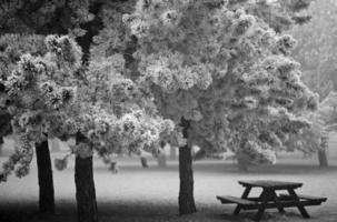 Ich wünsche dir einen schönen Winter foto