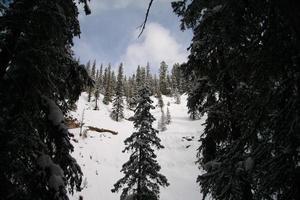 Bäume im Winter 8 foto