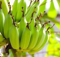 rohe Banane