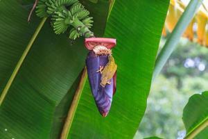 gestreifter Spinnenjägervogel foto