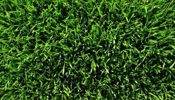 Textur grüner Rasen foto