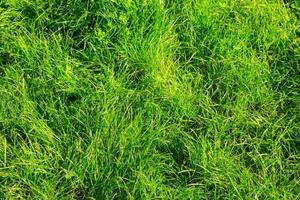 ungeschnittenes grünes Gras foto
