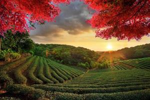 Bild der schönen Landschaft, Taiwan foto