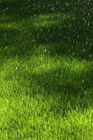 Sprinkler gießen den Rasen foto