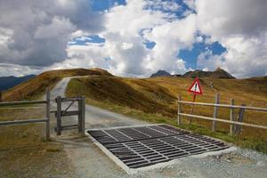 Viehwache in den Tiroler Bergen foto
