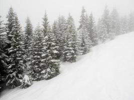 schneebedeckte Bäume im Nebel