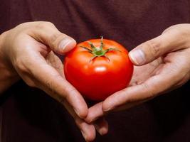 rote frische Tomate foto