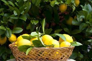 Korb mit Zitronen foto