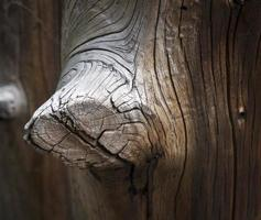 grauer Holzknoten, der aus dem alten braunen Pfosten herausragt