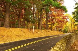 Herbstszene mit Straße im Wald foto