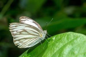 Schmetterling. Campingverbot krang