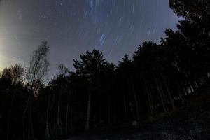 Sterne im Wald foto