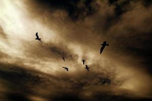 Vögel foto