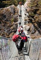 Yaks und Menschen auf hängender Hängebrücke foto