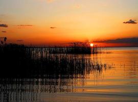 Sonnenuntergang auf Schilf foto