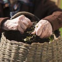 Hände der alten Frau foto