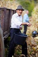 alter Mann bei der Maisernte, der einen Eimer hält