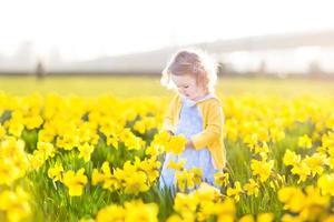 Kleinkindmädchen, das gelbe Narzissenblumen am sonnigen Sommerabend sammelt foto
