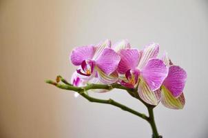 Orchideenblüten foto