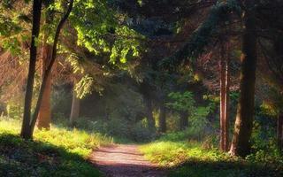 Gehweg im Garten foto