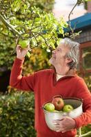 reifer Mann, der Äpfel vom Baum im Garten pflückt foto