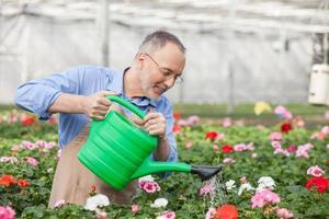 geschickter alter Gärtner gießt Pflanzen im Gewächshaus