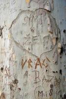 Nachricht auf Rindenbaum foto