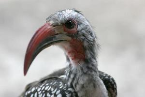Vogel Nahaufnahme foto