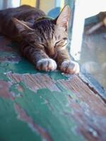 faules Kätzchen, das neben dem Fenster schläft foto