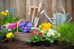 Gärtner pflanzt Blumen
