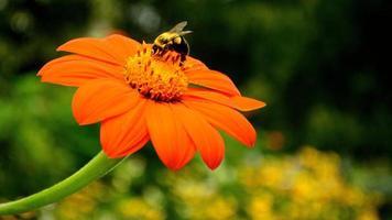Blumennahaufnahme