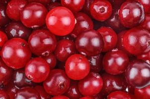 Cranberry-Nahaufnahme foto