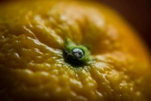 Nahaufnahme orange