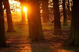 Sonnenuntergang im Wald foto