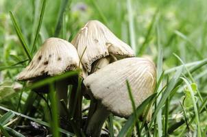 Pilze Nahaufnahme. foto
