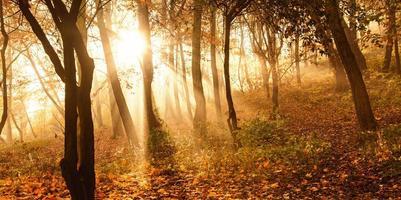 mystische Sonnenstrahlen zwischen Bäumen foto