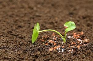 medizinische Dankespflanze auf dem Boden foto
