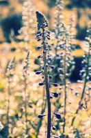 Blumenhintergrund mit buntem Bokeh, abstrakter Blumenfrühlingshintergrund foto