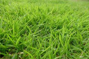 grüner Rasen foto