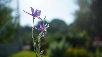 Blume und Nahaufnahme