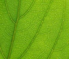 super detailliertes grünes Blatt foto
