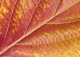 Nahaufnahme Herbstblatt